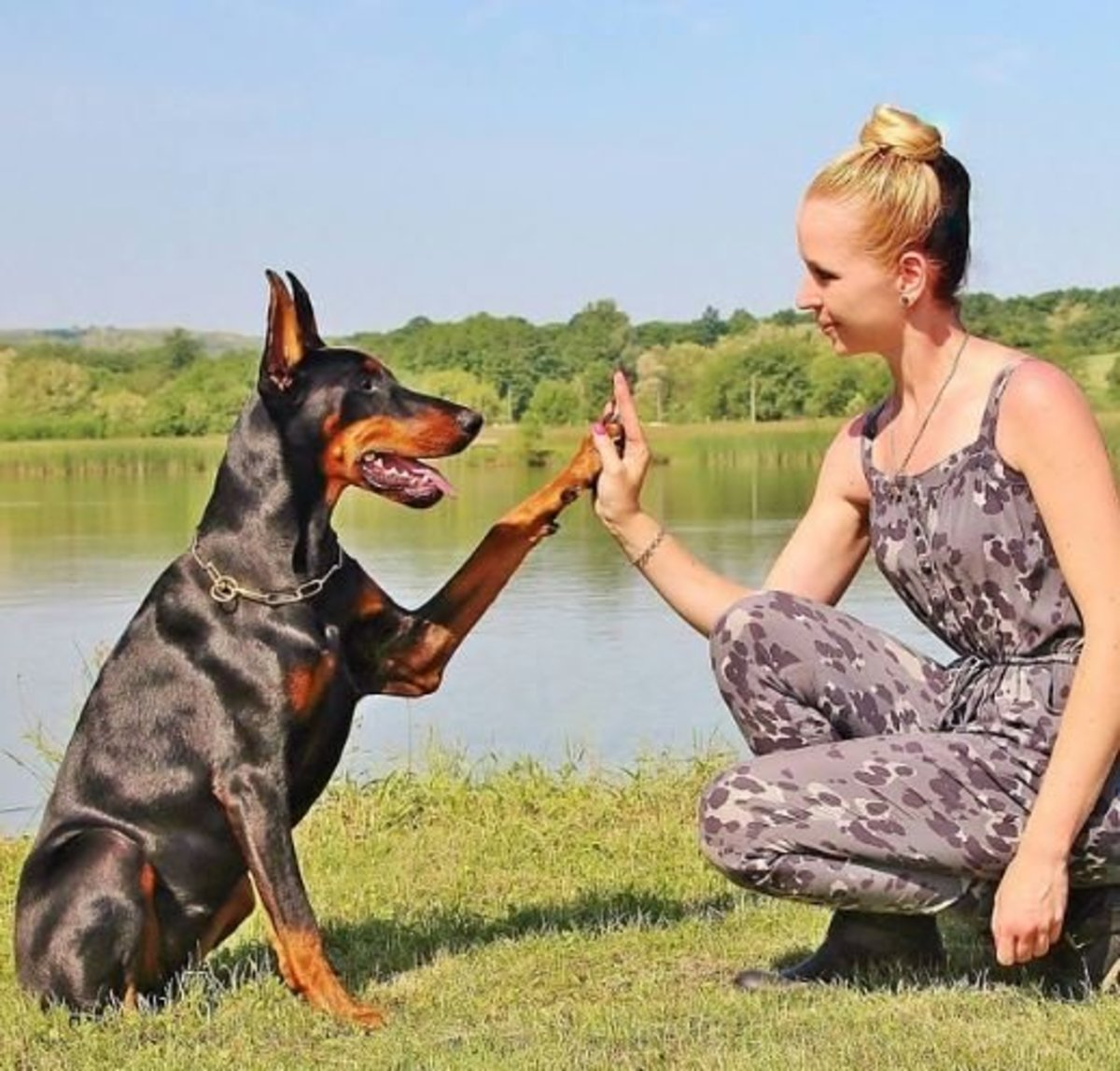 Build Confidence in Your Pooch