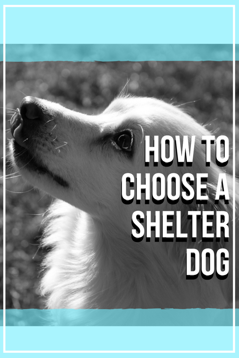 Here are some tips on how to choose a shelter dog.