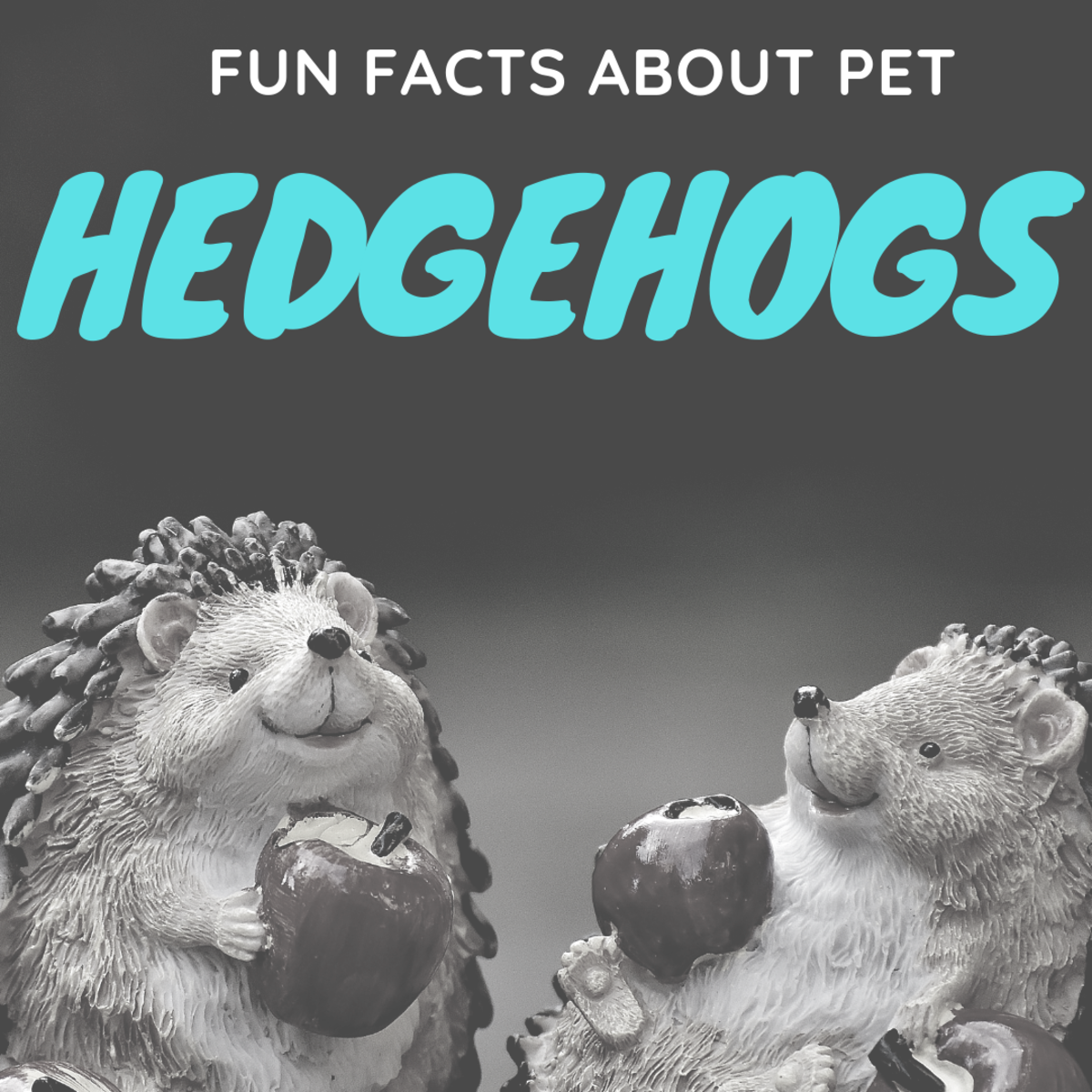 Fun Facts About Pet Hedgehogs