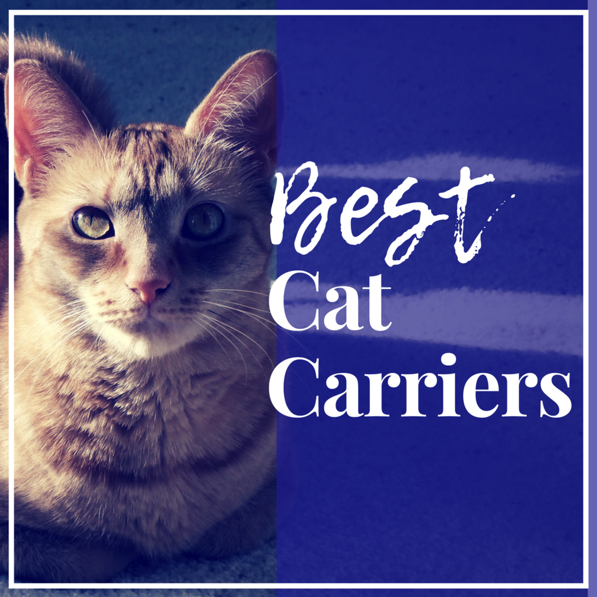 A list of the best cat carriers and advice on how to choose the right one for your cat.