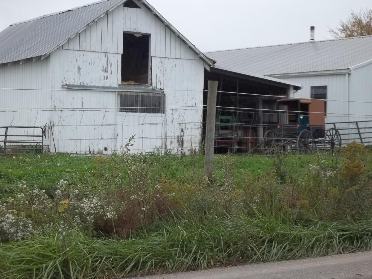 Amish Barn and Buggy