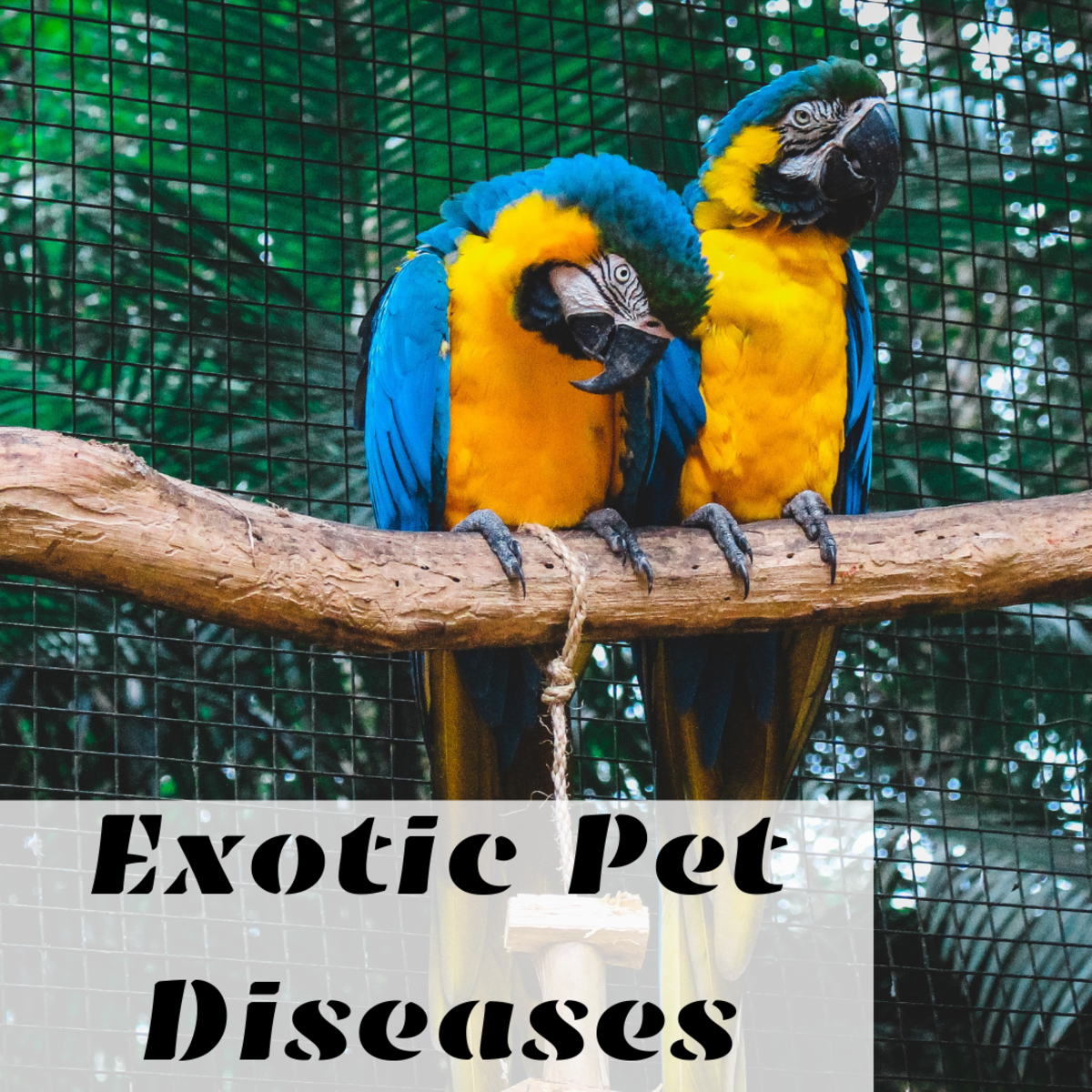 It's important to recognize and understand the different diseases that can affect exotic pets.