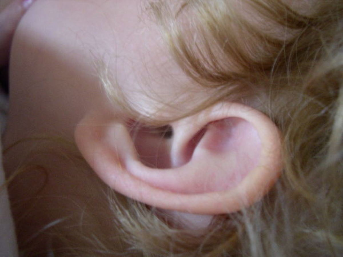 The pinna or auricle of the ear and the opening of the ear canal