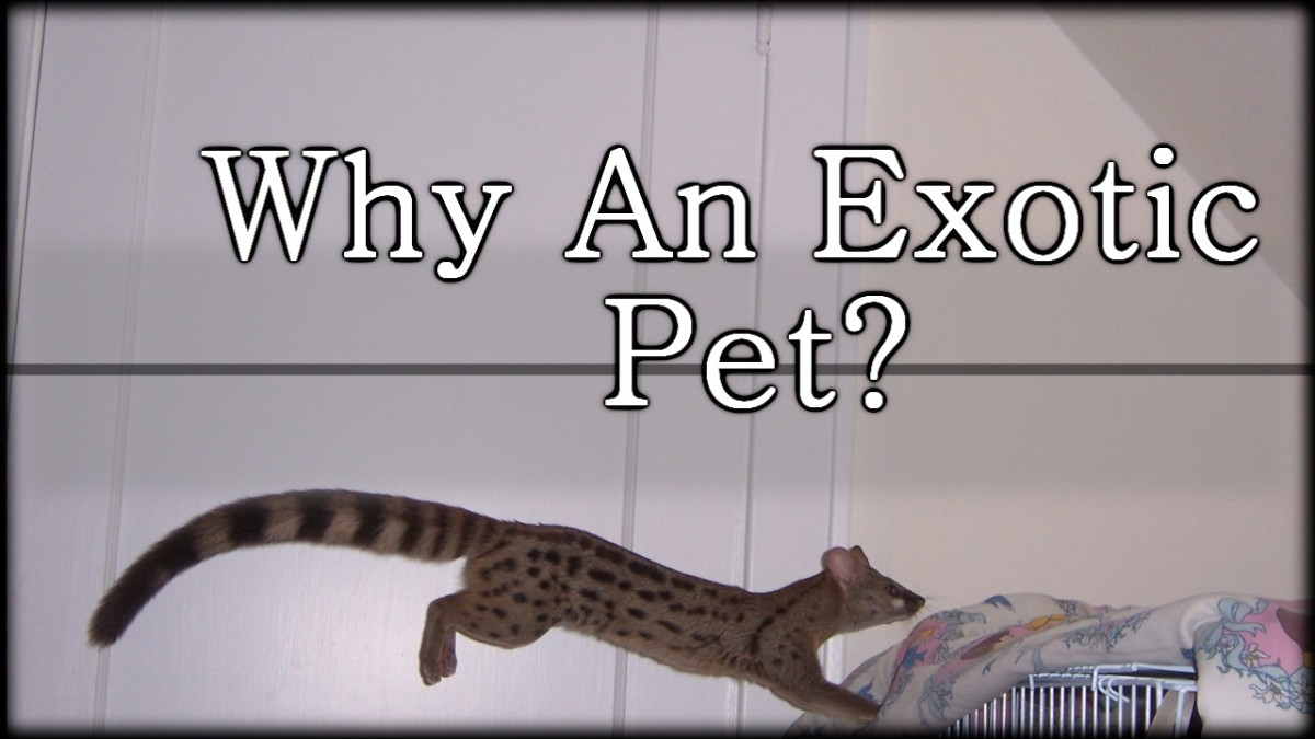 Greed? Ego? Why Do People Keep Exotic Pets?