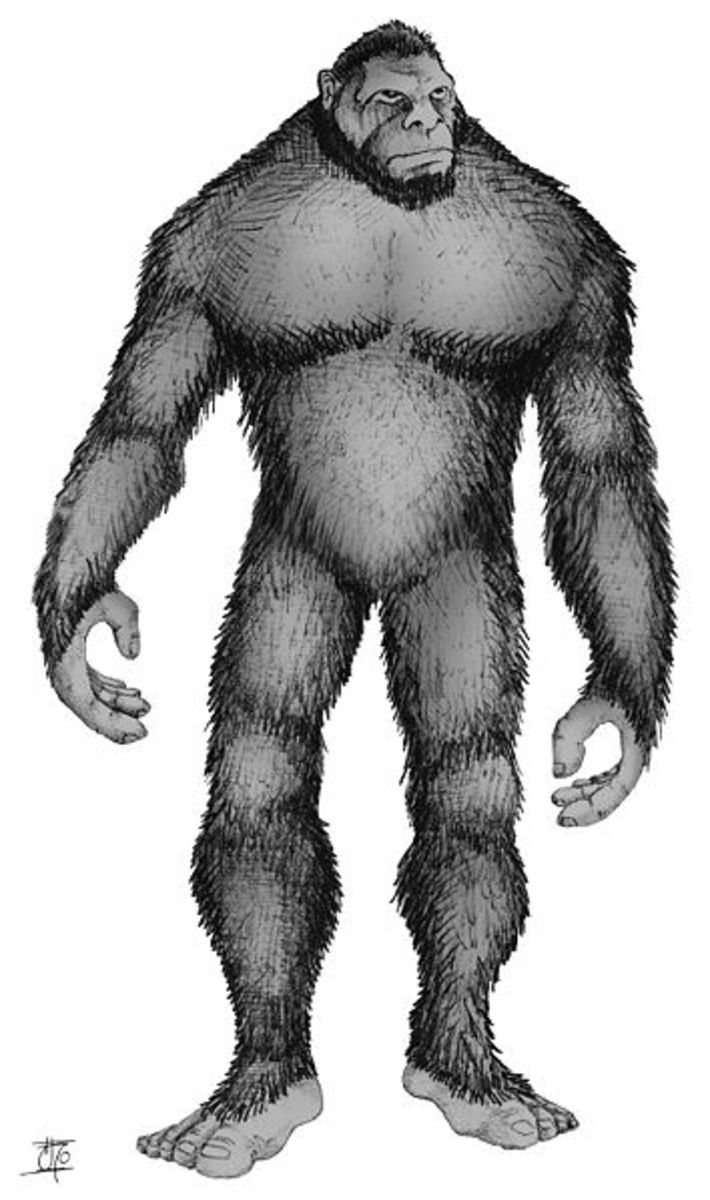 With a massively muscled upper body, thick fur and upright walking gait Orang Pendek may resemble a mini-Bigfoot.