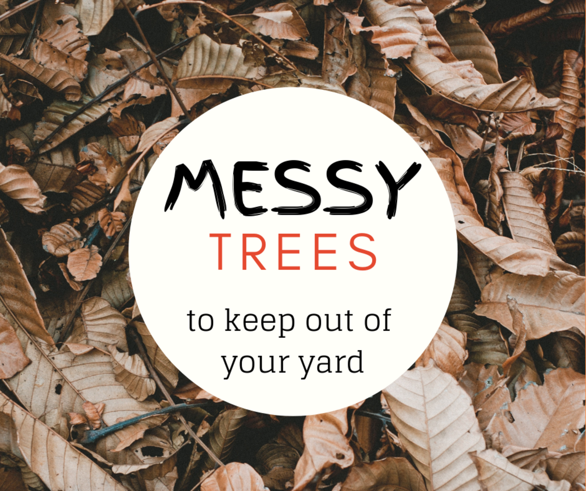 5 Worst Messy Trees For The Lazy Landscaper Dengarden