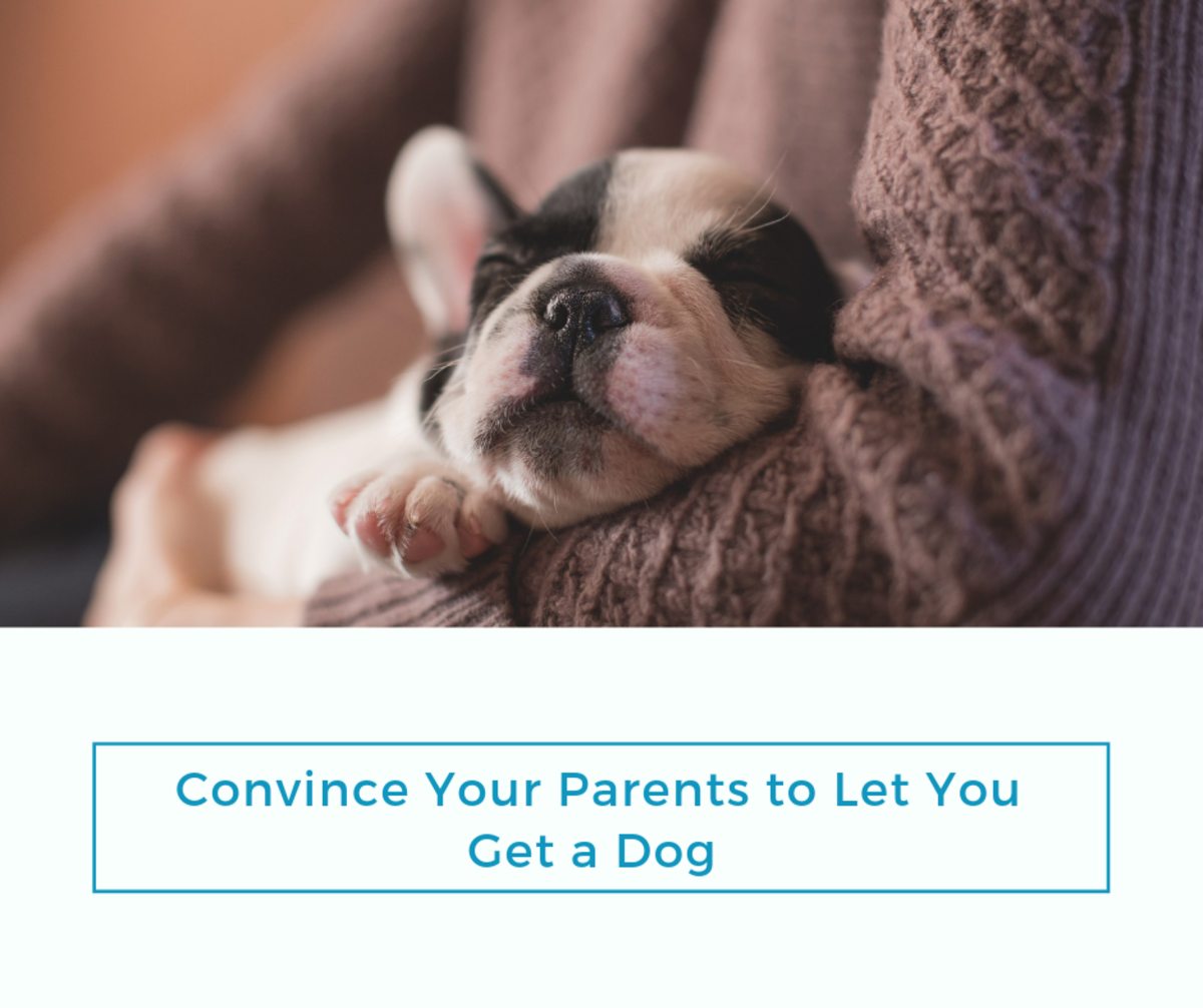 Learn the best methods for convince your parents to let you get a dog!