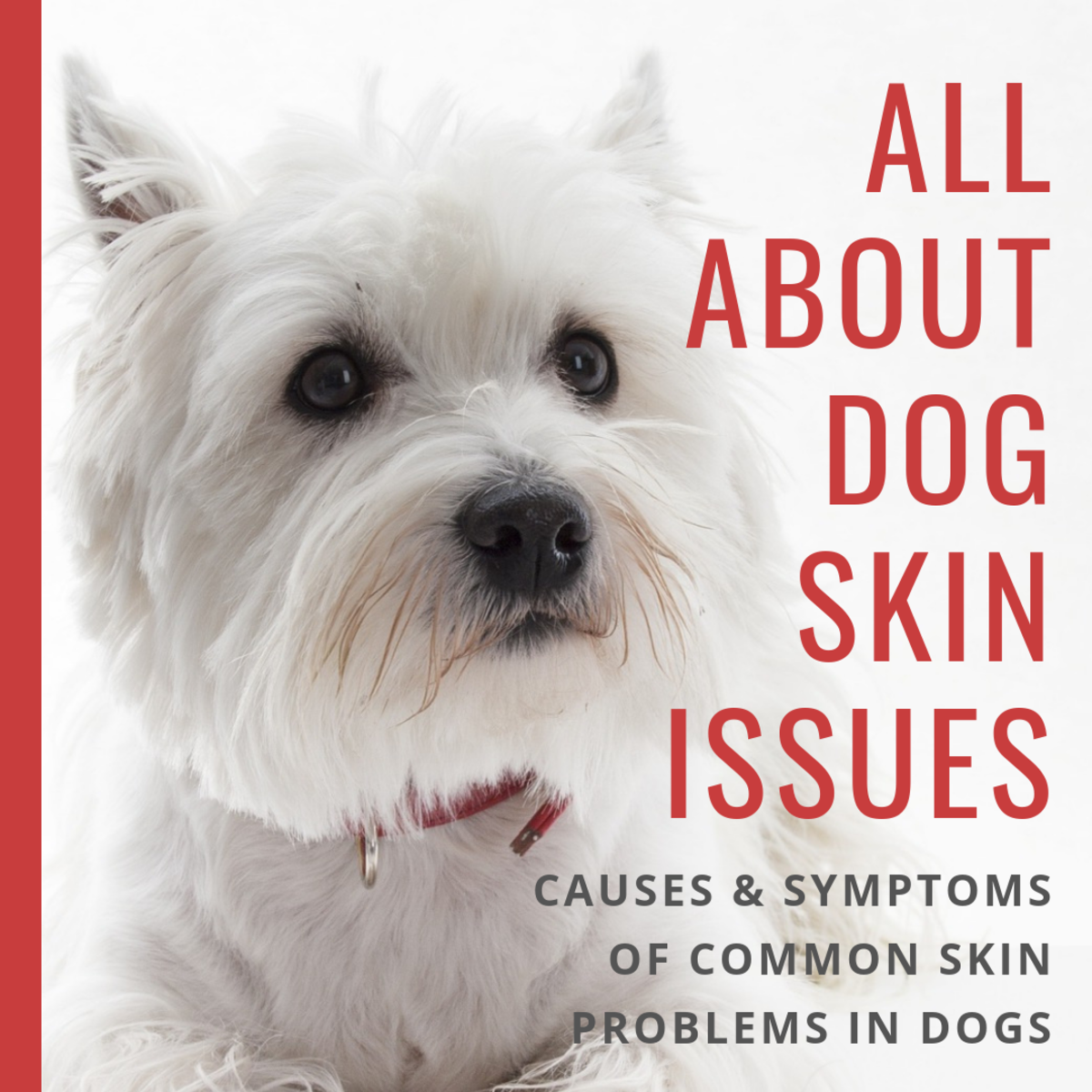 Dog Skin Disorders: Causes, Symptoms, Types, and Breeds Prone to Them