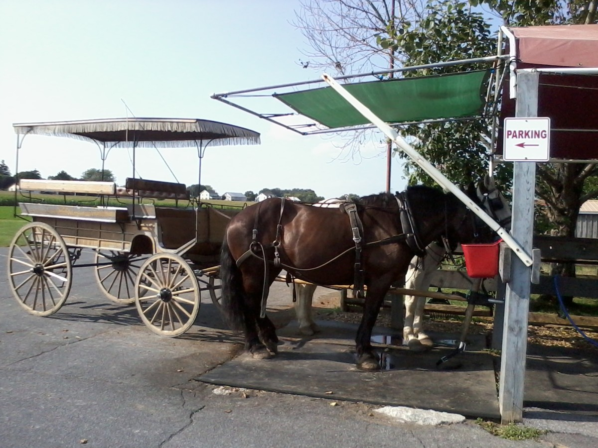 Buggy rides are a fun and unique way to see the country side in Lancaster county - and to have a chance to interact with Amish people!