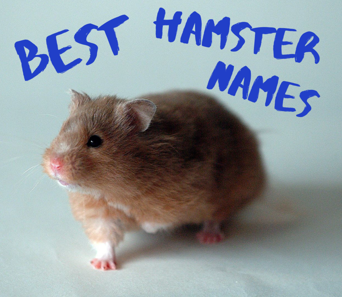 Need an awesome name for your adorable hamster? How about Chubby Cheeks, Simon, Cottonball, or Pepper? Get lots more ideas in this article.