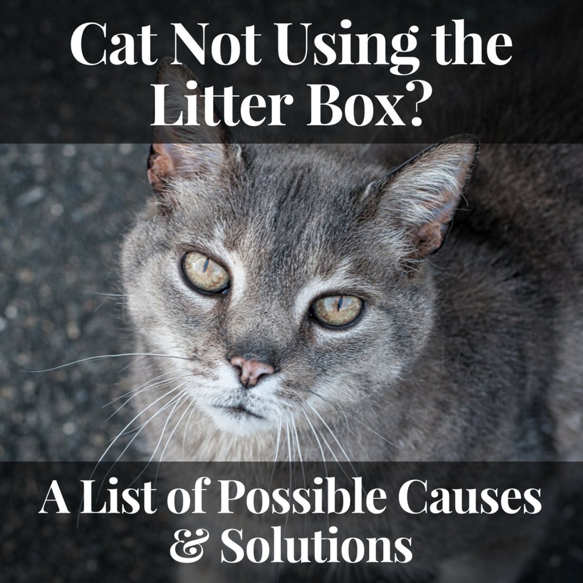 Figuring out why is a cat is not using the litter box is the first step to solving the problem.