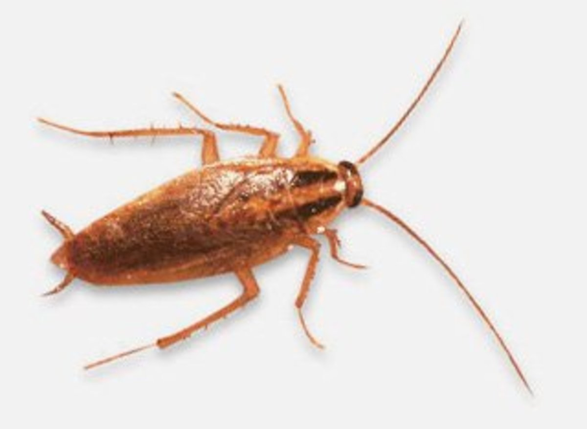 10 Non-Toxic Ways to Eliminate Roaches