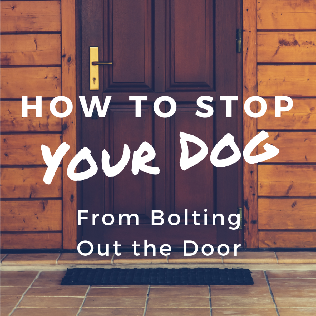 How to Prevent Your Dog From Running Out of the Door
