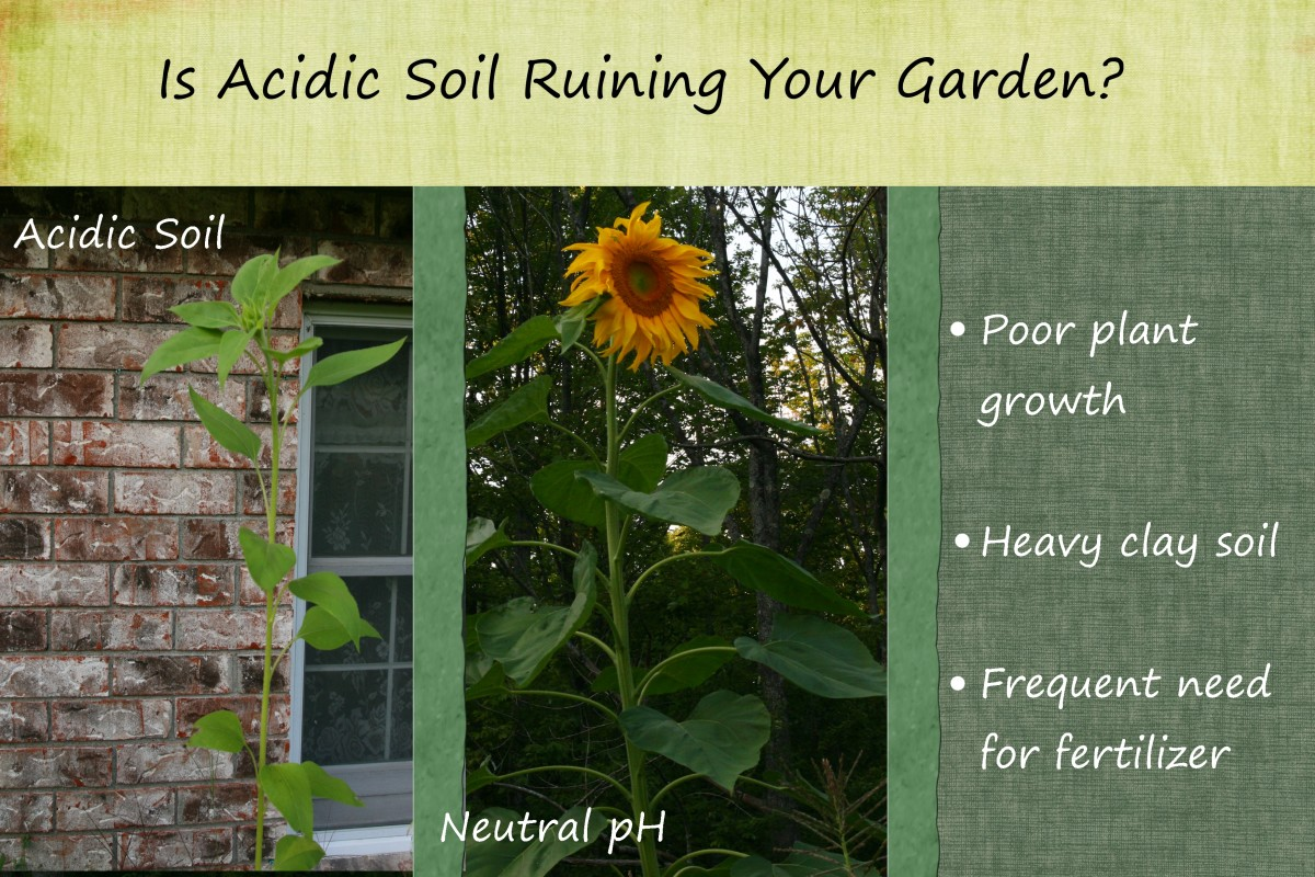 How to Make Soil Less Acidic