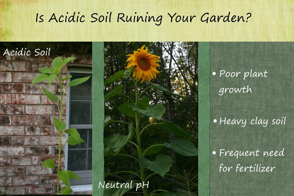 How to Make Soil Less Acidic