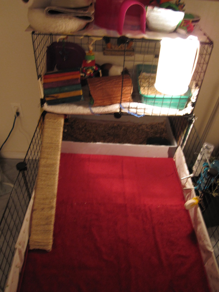This is what it looks like before cleaning. The cavies are on the upper level with their tunnel toys blocking them from going back down.