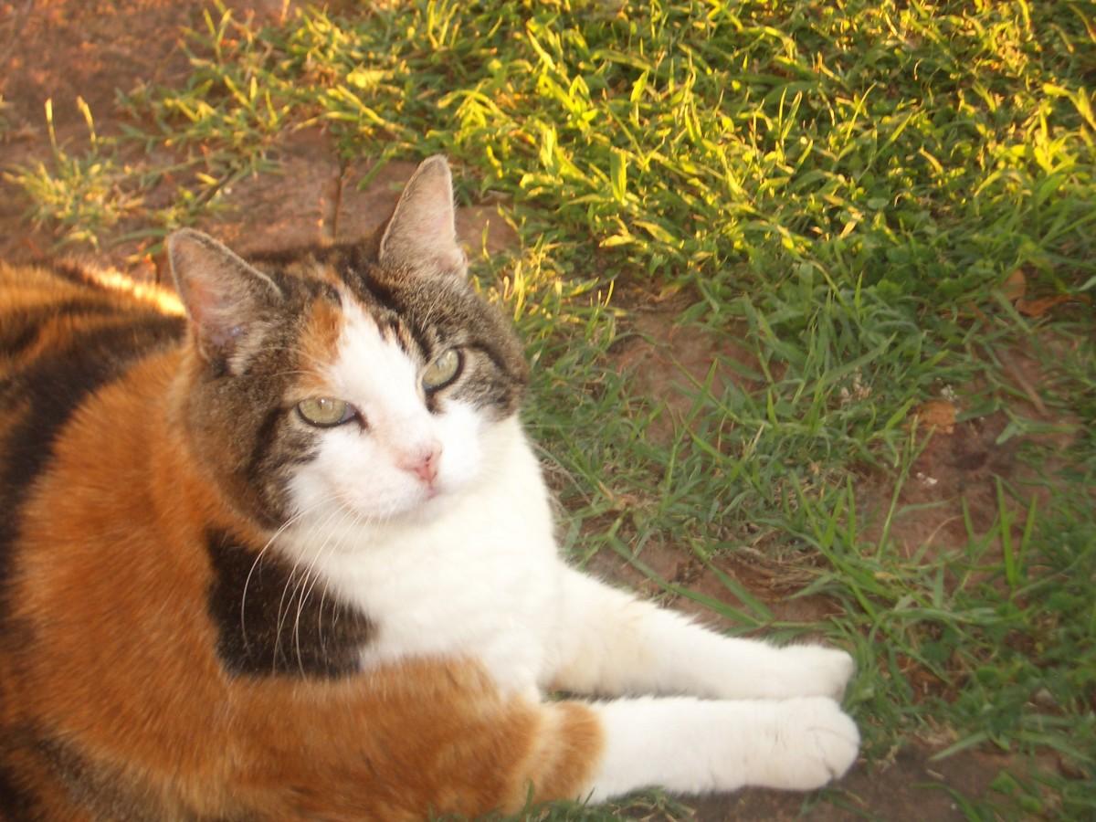 Tinka, my pussy cat.