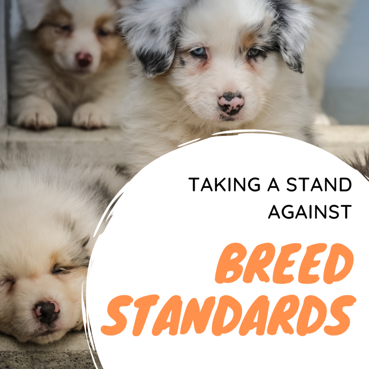 Breed standards are harmful to future generations of dogs.