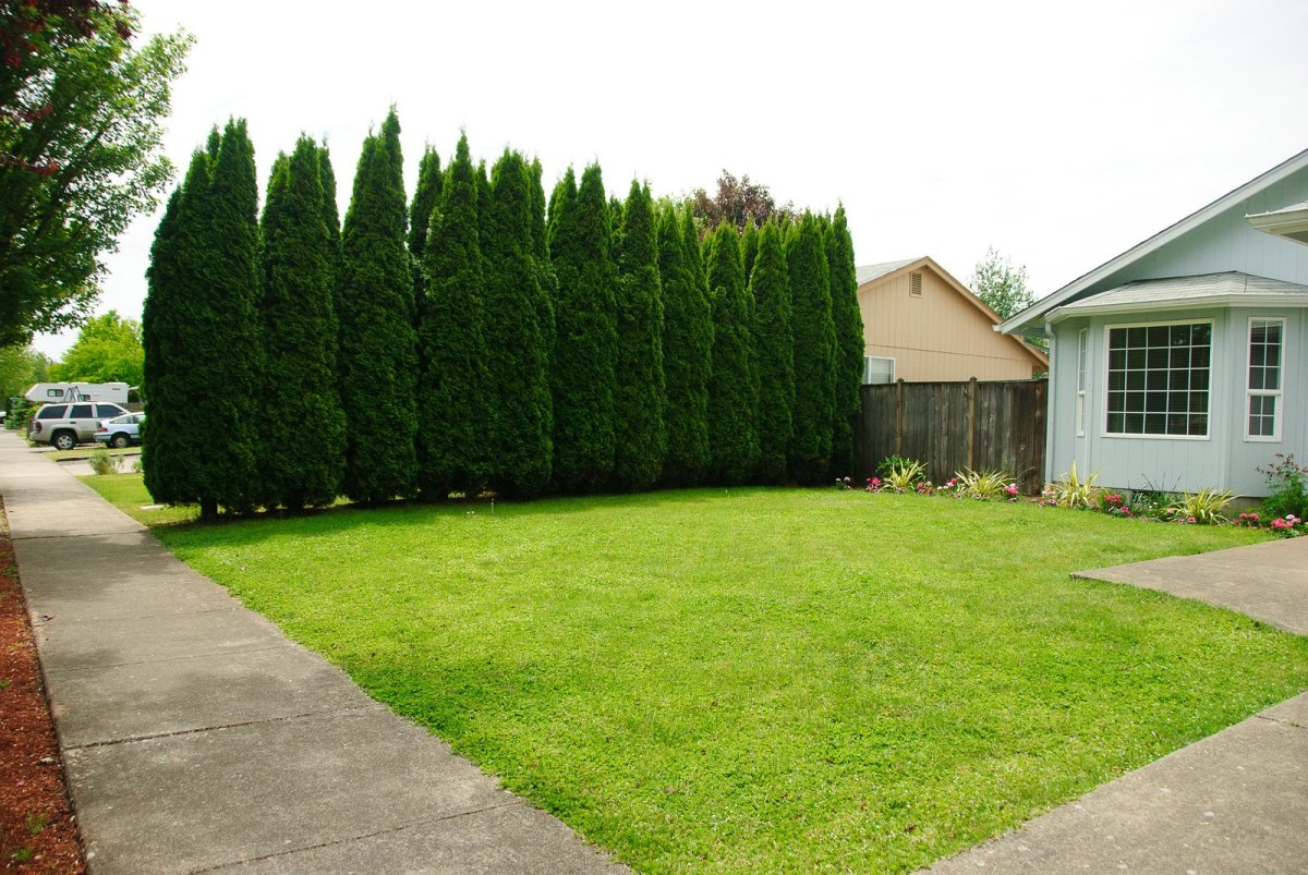 Try using evergreen trees to create a natural privacy screen!