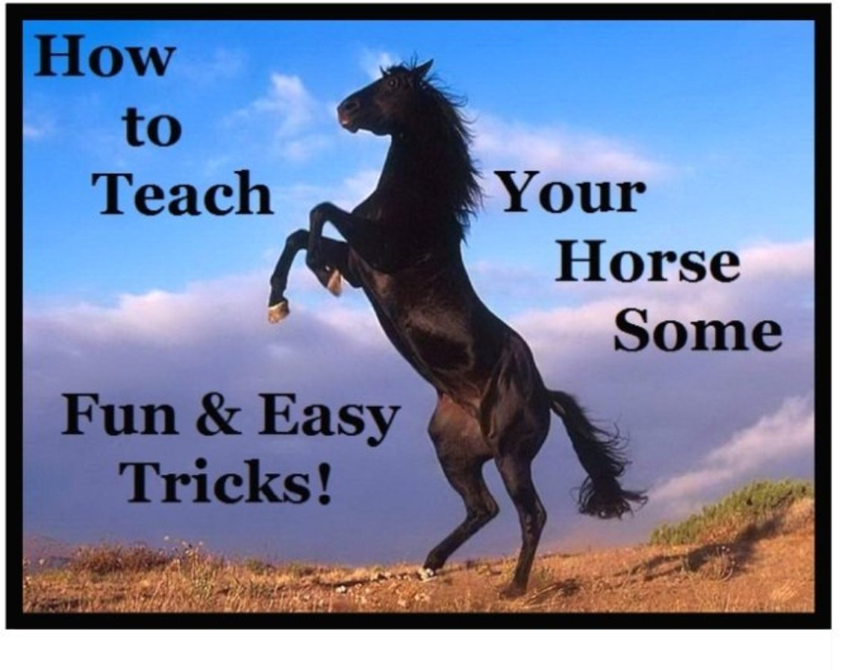 3 Simple Tricks to Teach Your Horse