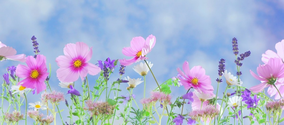 How to Keep Your Annual Flowers Blooming All Summer