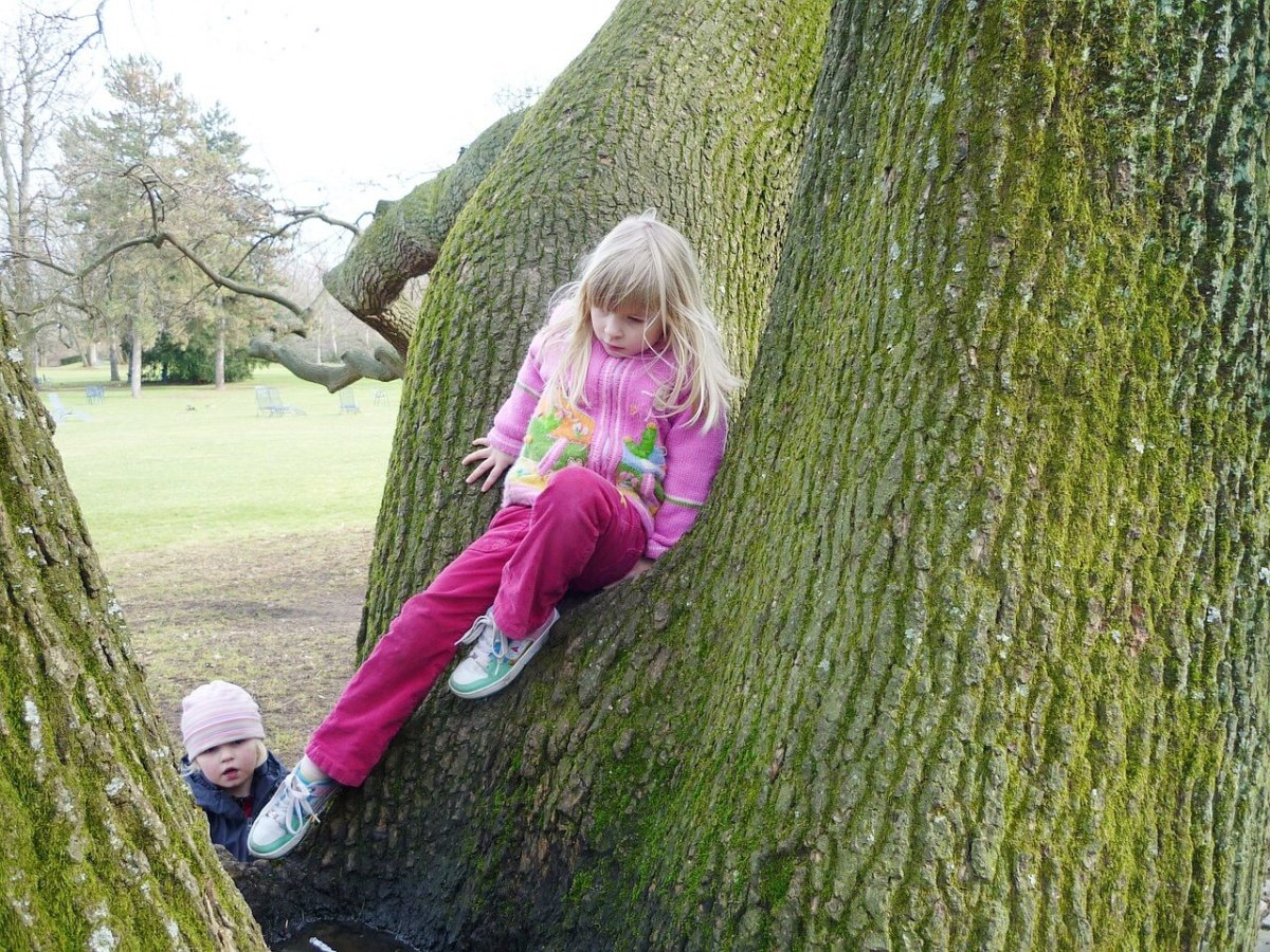 Climbing trees in a natural play area can be fun.