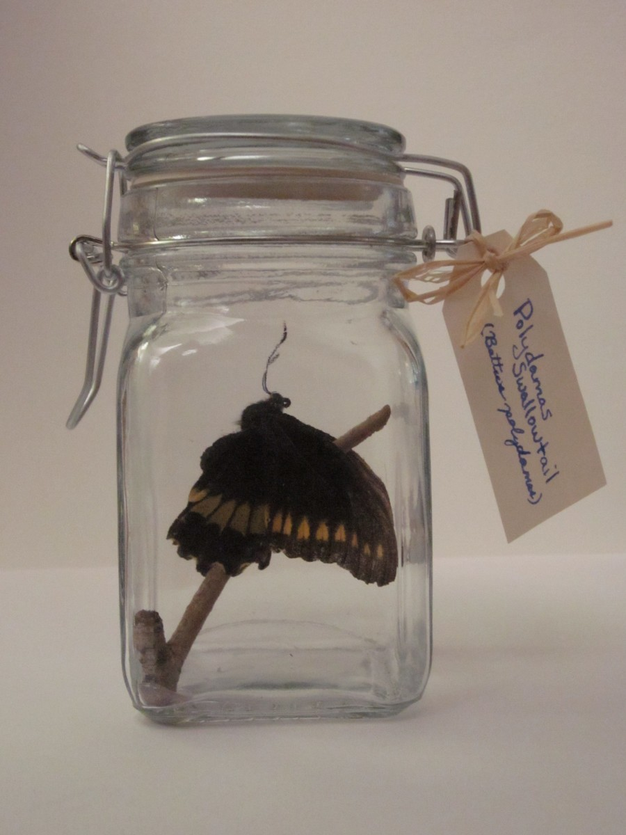 Craft Project: How to Make a Butterfly Jar