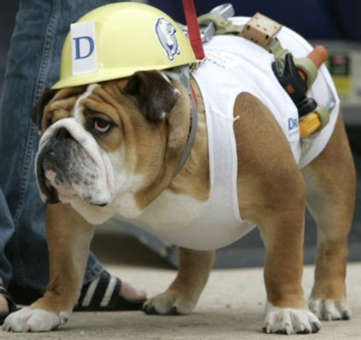 Halloween Costumes for Dogs: Tips on How to Measure for Size and Safety
