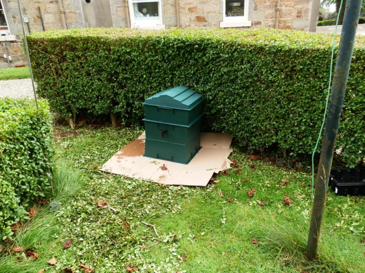 Worm composting bin in sheltered position behind a hedge