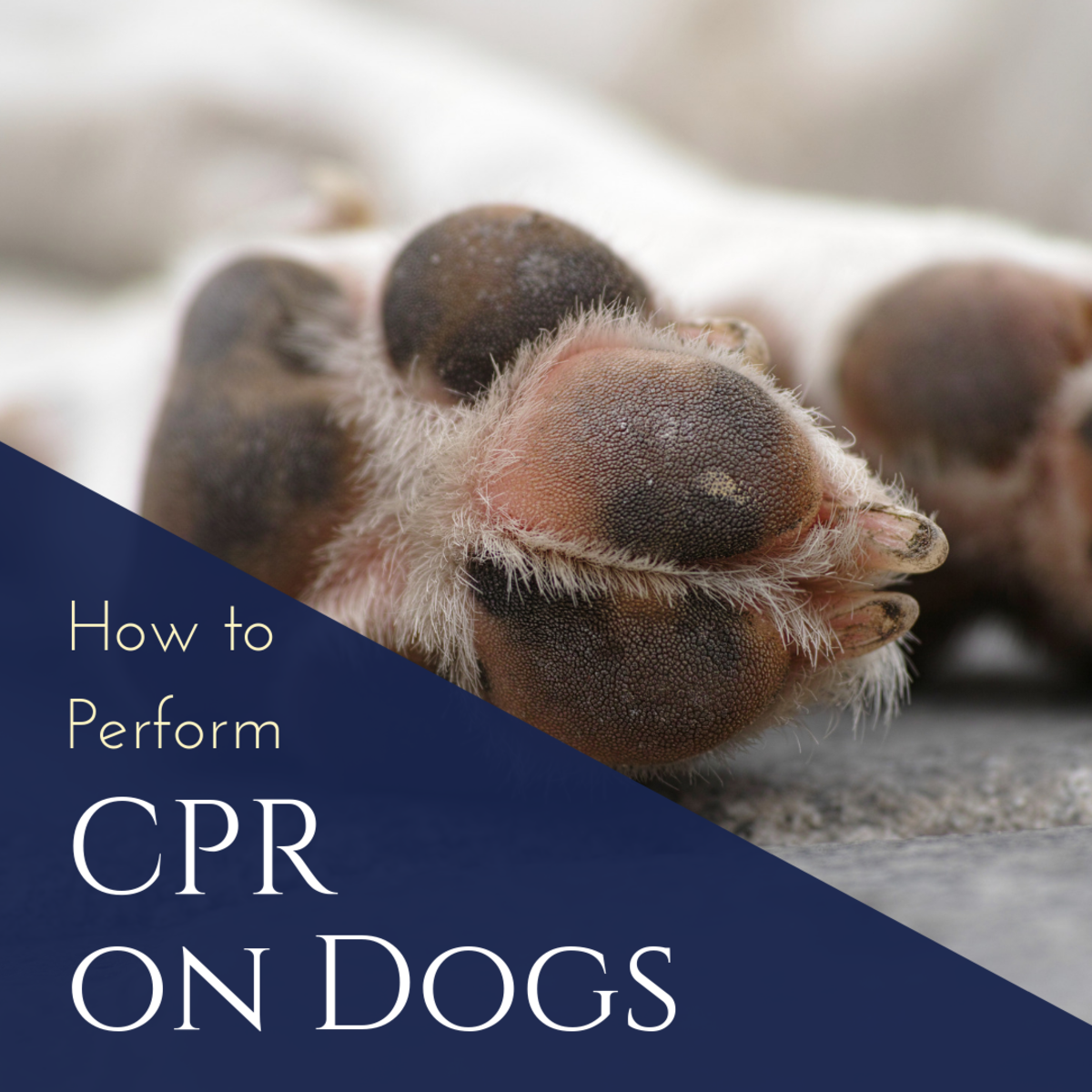 How to Perform CPR on Your Dog