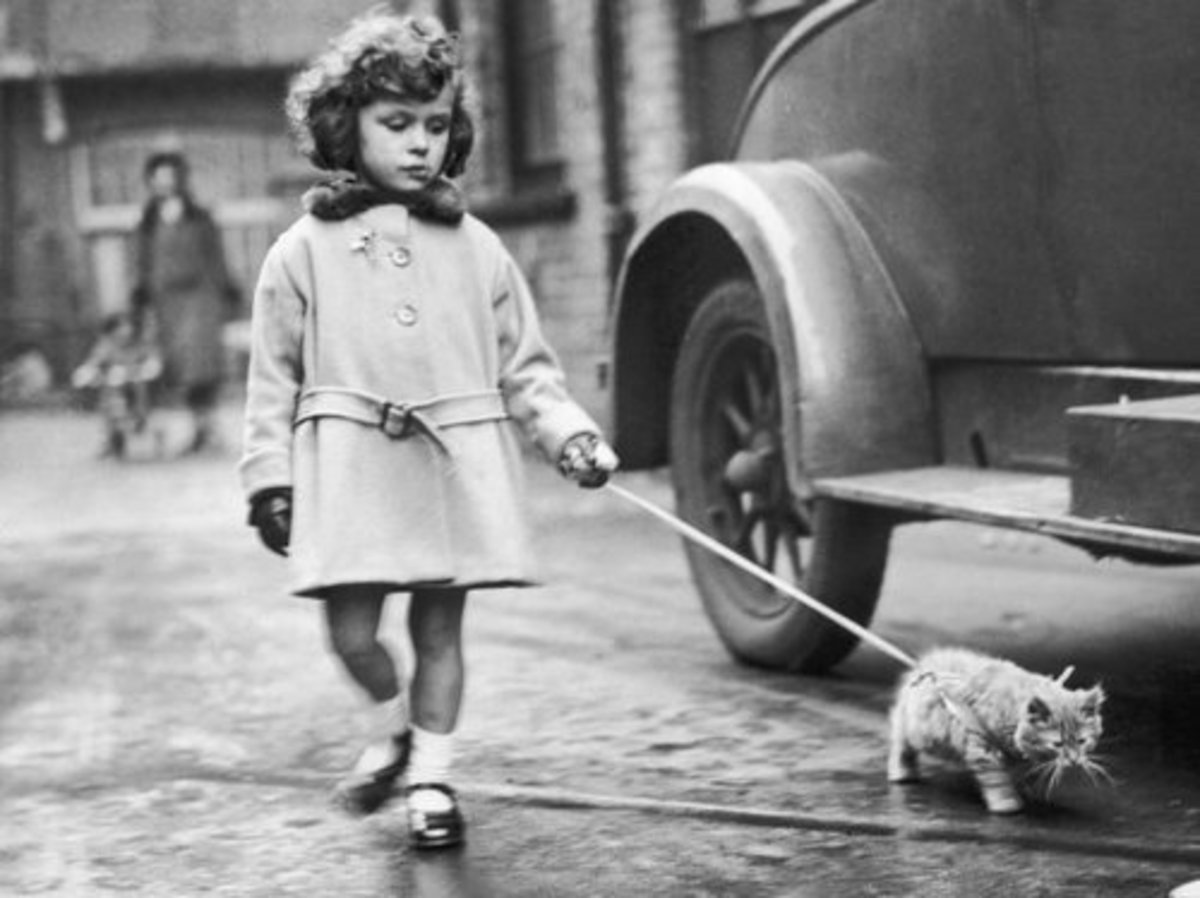 Little Girl Walking a Cat on a Leash—1950's