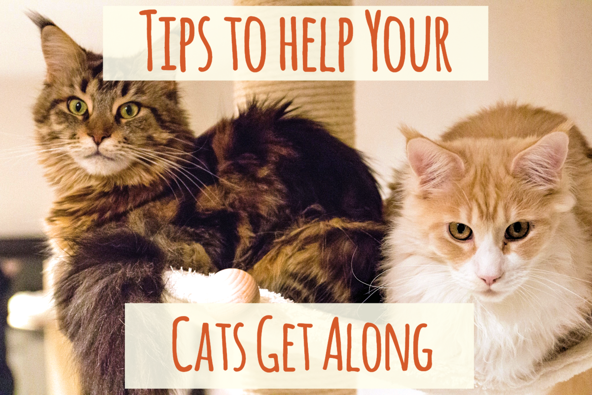 Find out some reasons why cats sometimes don't get along and some tips to help them co-exist peacefully in your home.