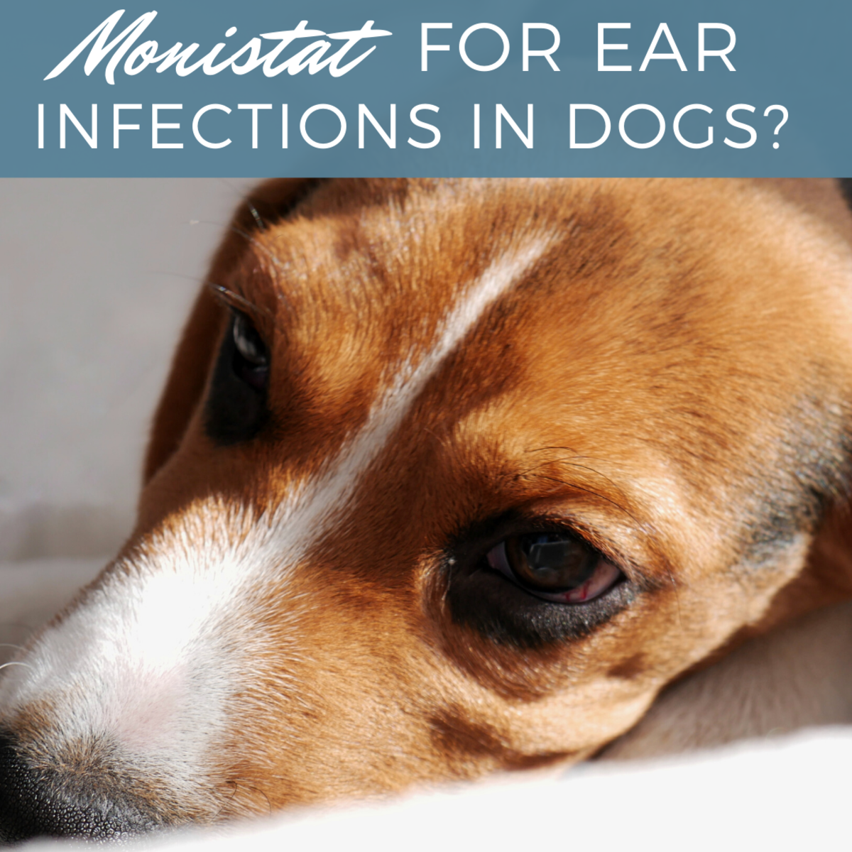Can Monistat Treat Your Dog's Ear Infection?