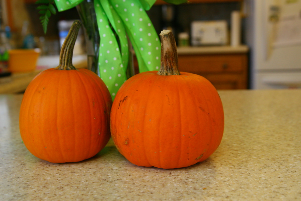"Use ""sugar"" or ""pie"" pumpkins for puree. Alternatively, butternut squash may be used."