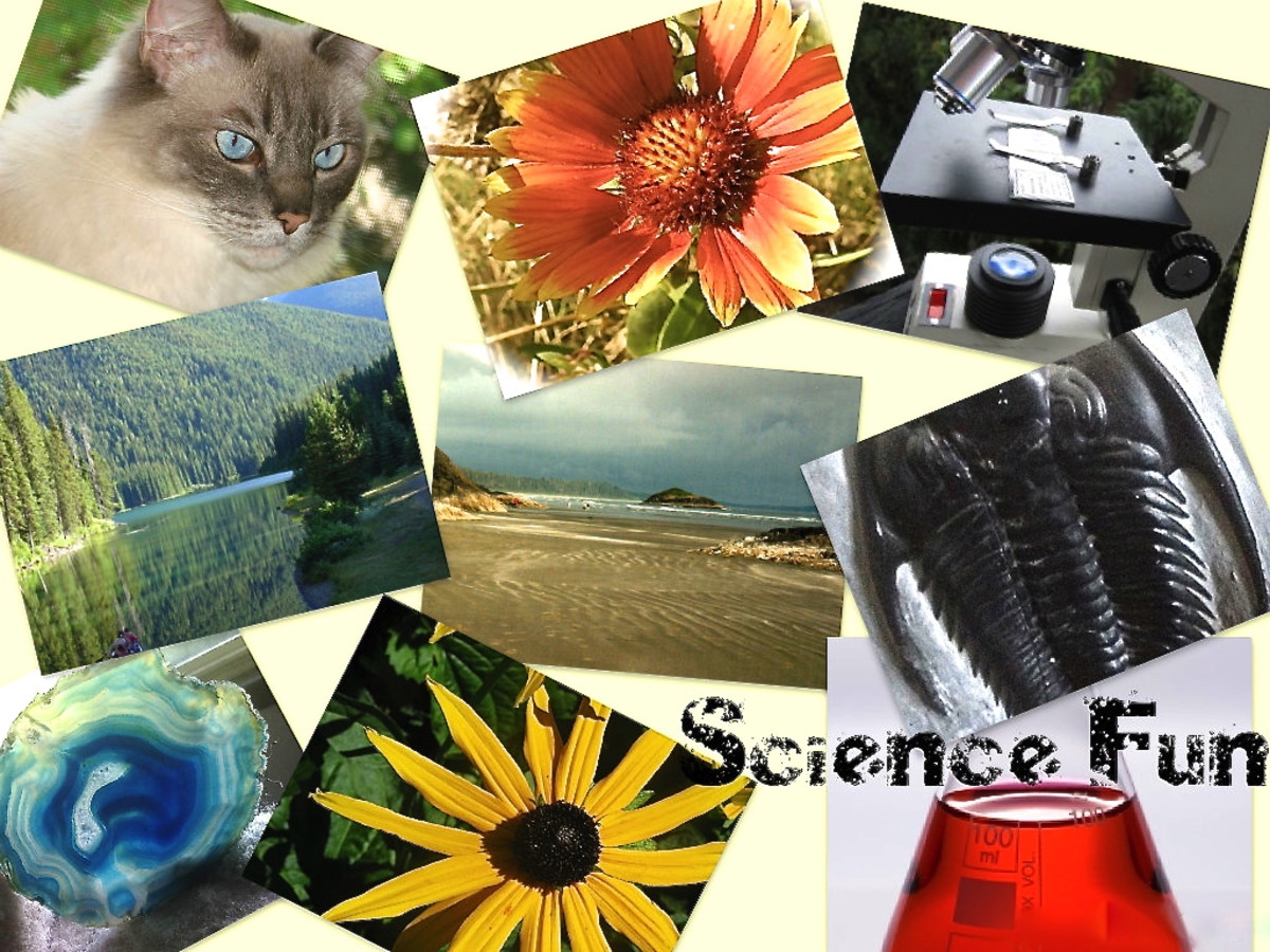 Science games enable students to learn about many different topics in science while having fun.