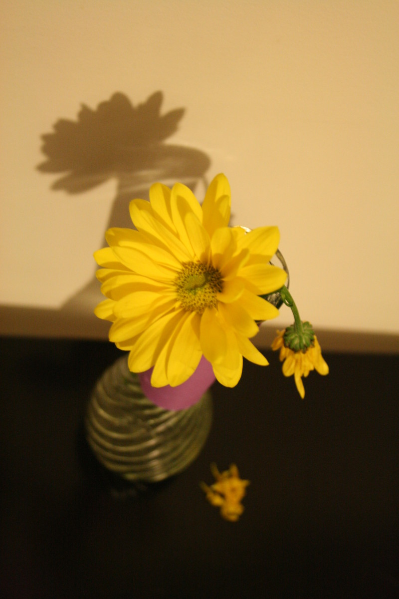 How to Prevent Bad Odors From the Standing Water in a Flower Vase