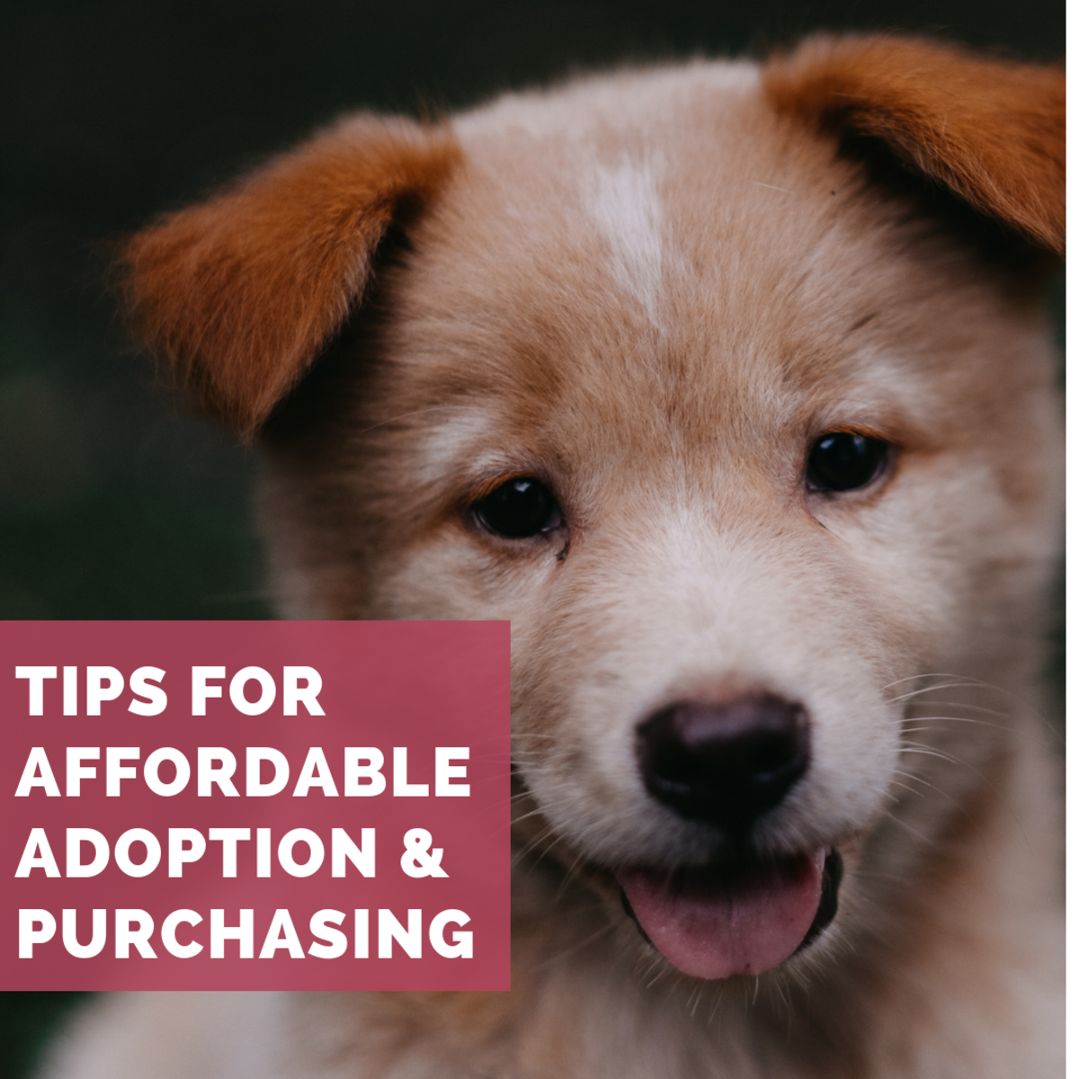 The Best Places to Find a Really Cheap Puppy