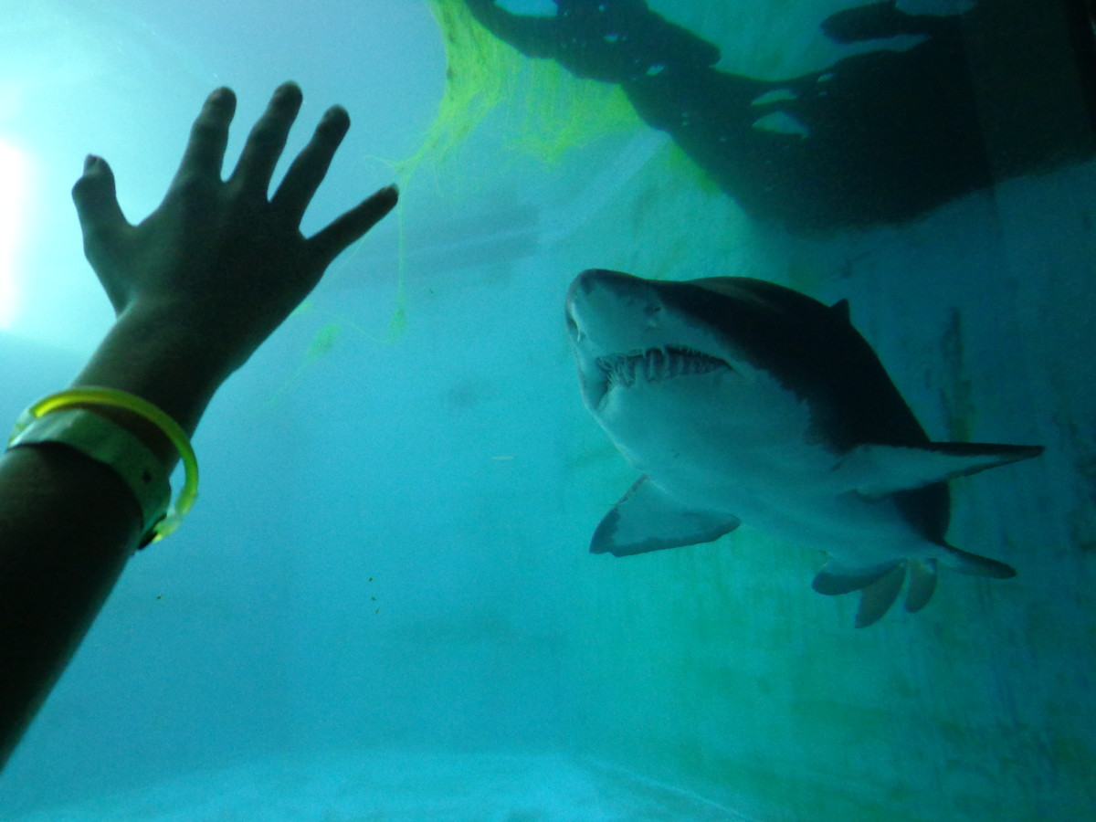 Kids ages 5-14 years old would enjoy getting up close with a shark at Pittsburgh Zoo and PPG Aquarium