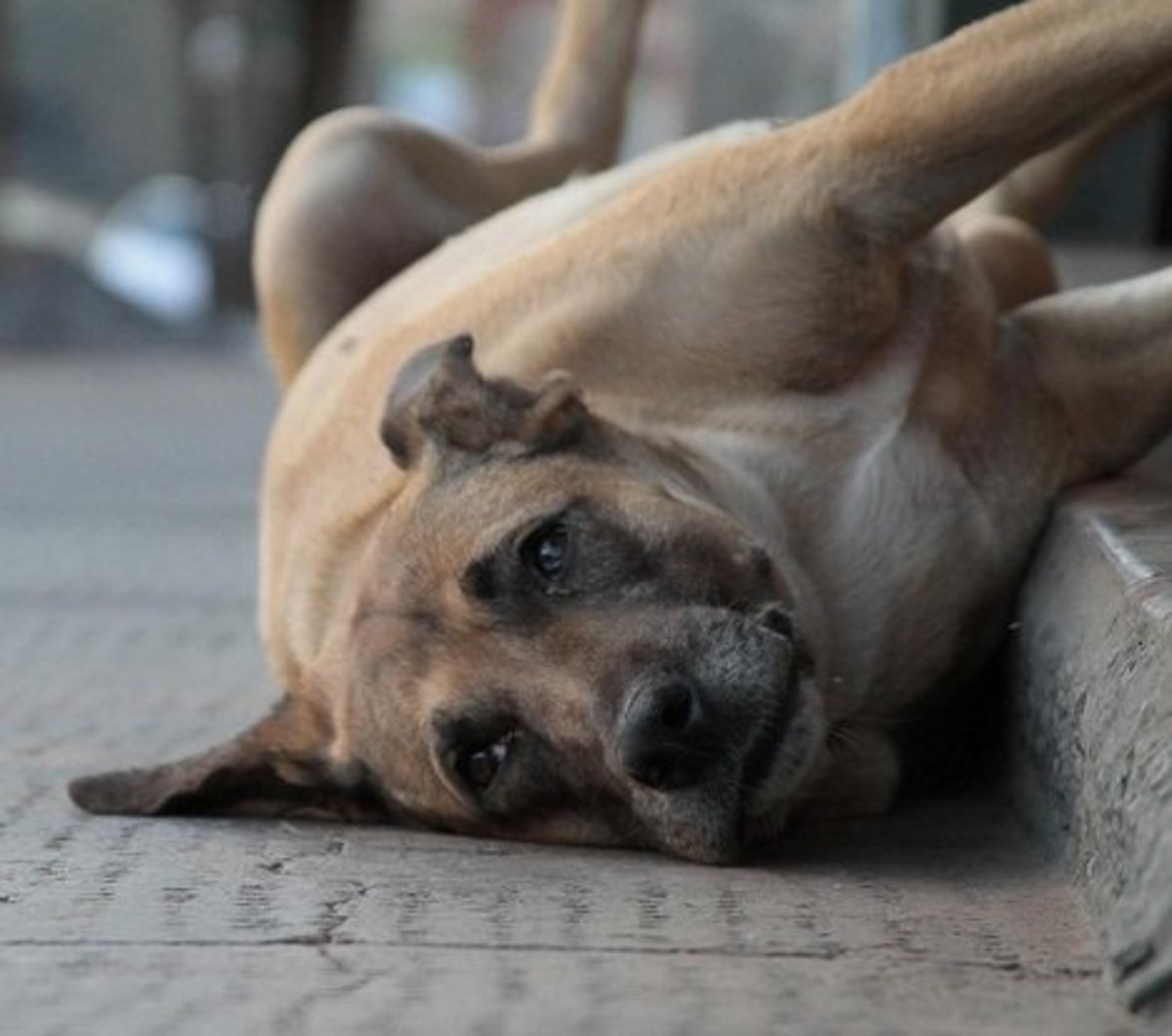 Best Dog Names From Brazil