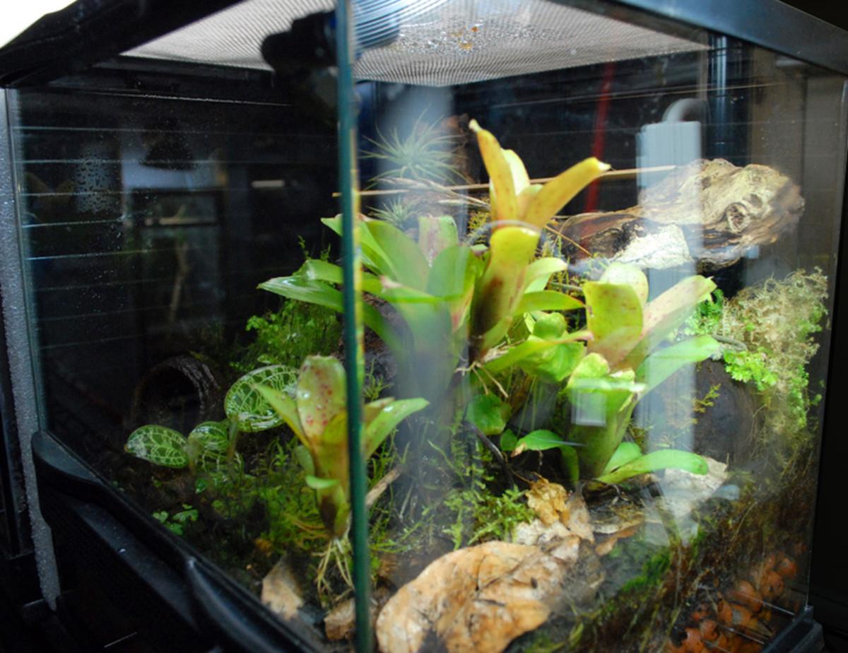 Here are a few tiger salamanders enjoying their vivarium home.