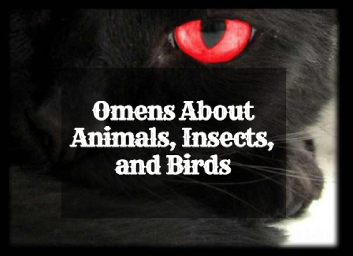 Animal Insect And Bird Omens And Their Meanings Exemplore