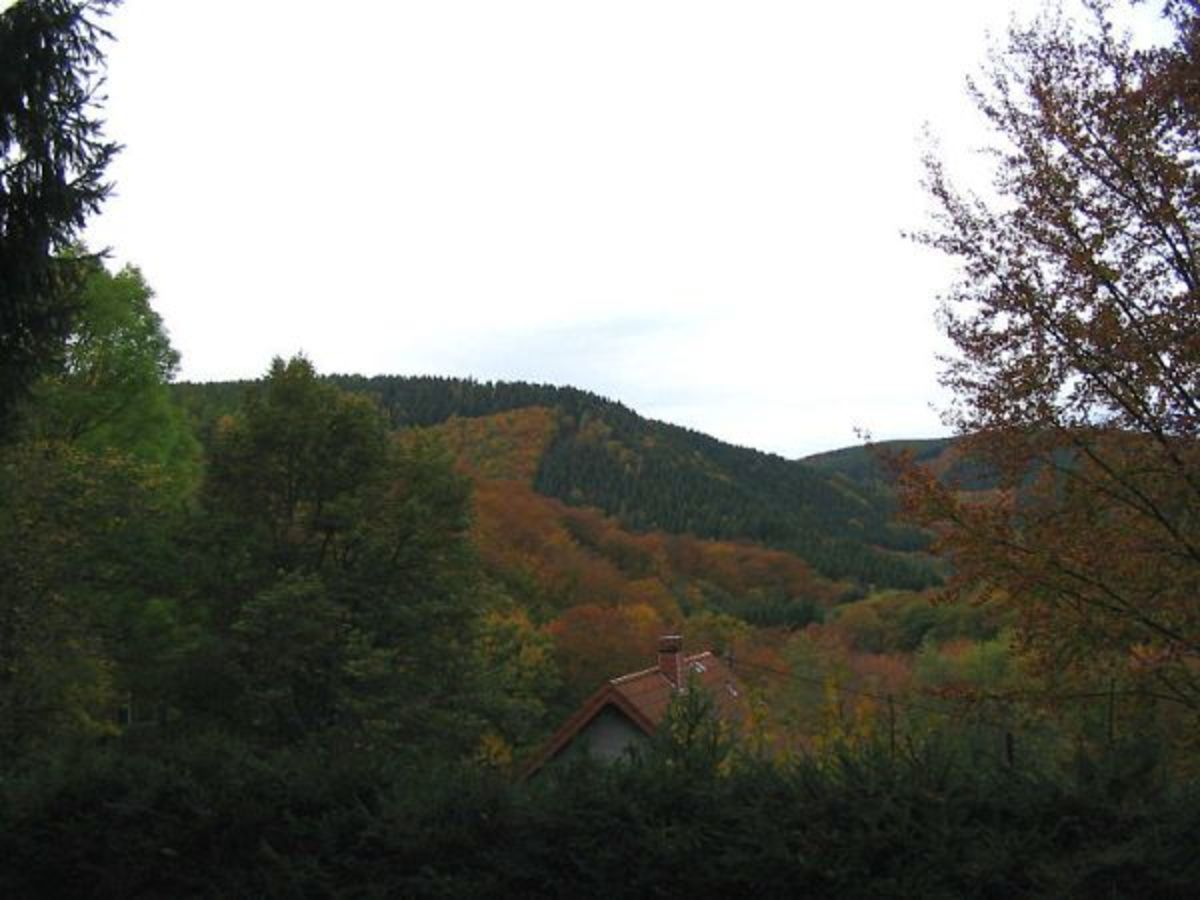 View of the type of terrain in the Huertgen Forest.