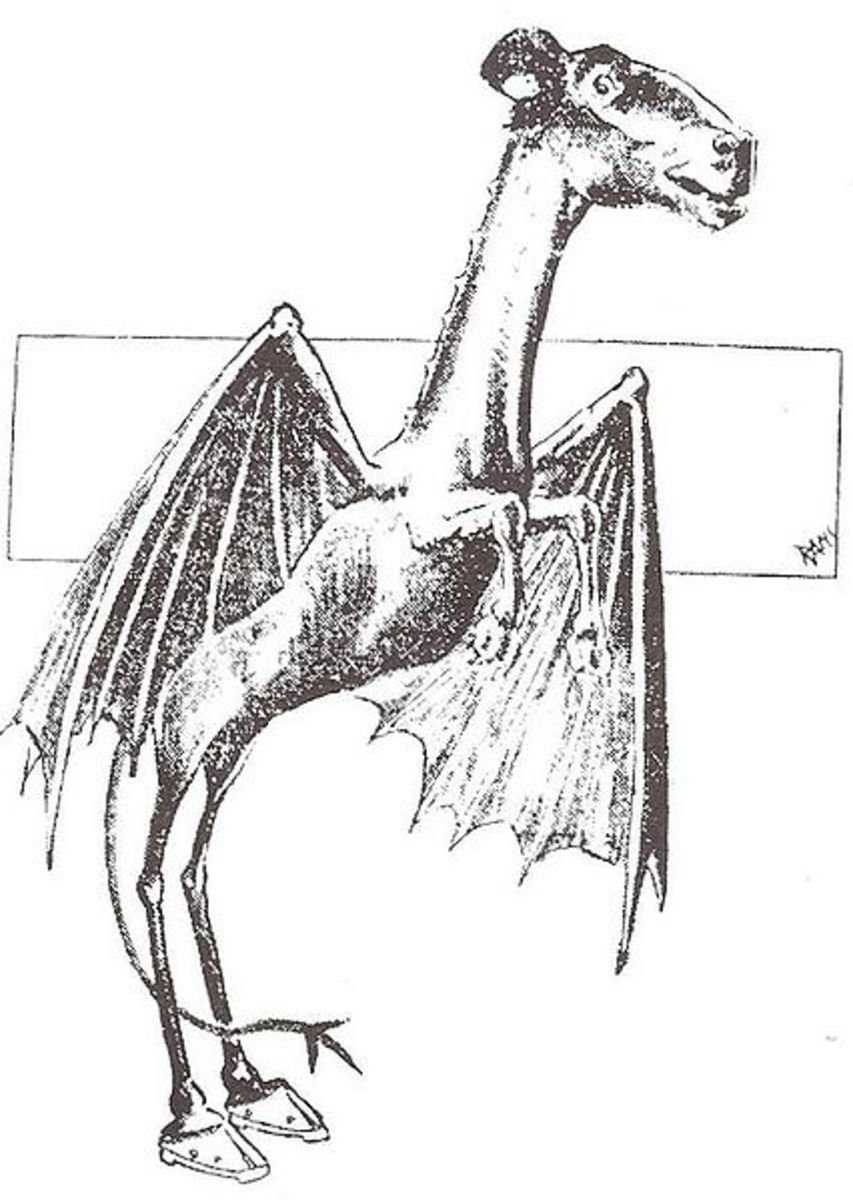 A sketch drawn during the 1909 sightings outbreak.  Most witnesses report the Jersey Devil to have the head of a horse, bat-like wings, cloven hooves and short arms with fierce claws.