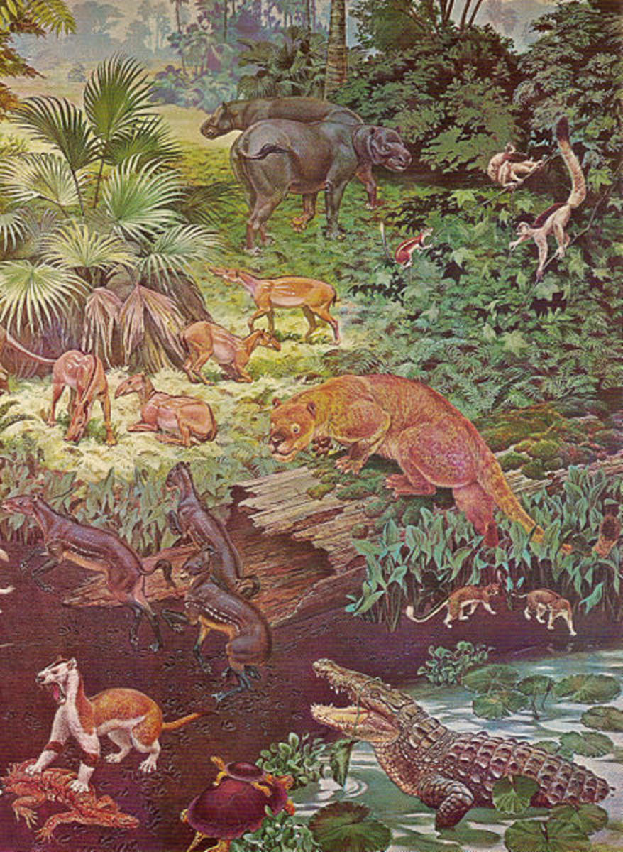 A depiction of the Eocene flora and fauna found in North America.
