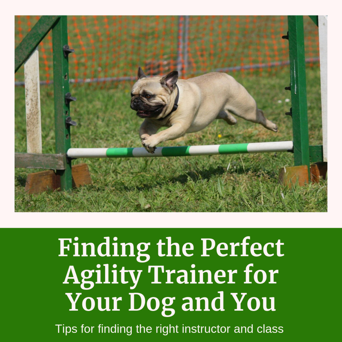This article will break down seven crucial tips for those looking to enter the exciting world of agility competitions with their dogs.