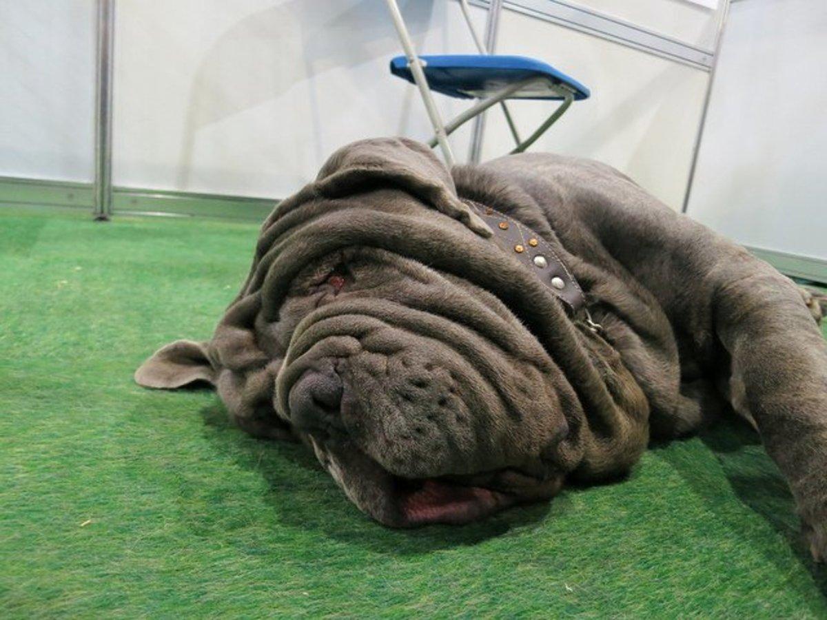 Five Ugly Dog Breeds