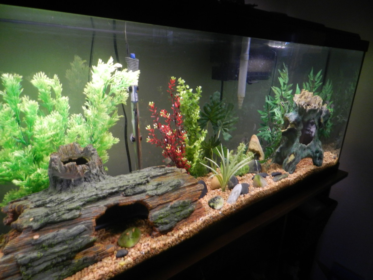How to change the water in your freshwater aquarium the for Tall fish tank decorations