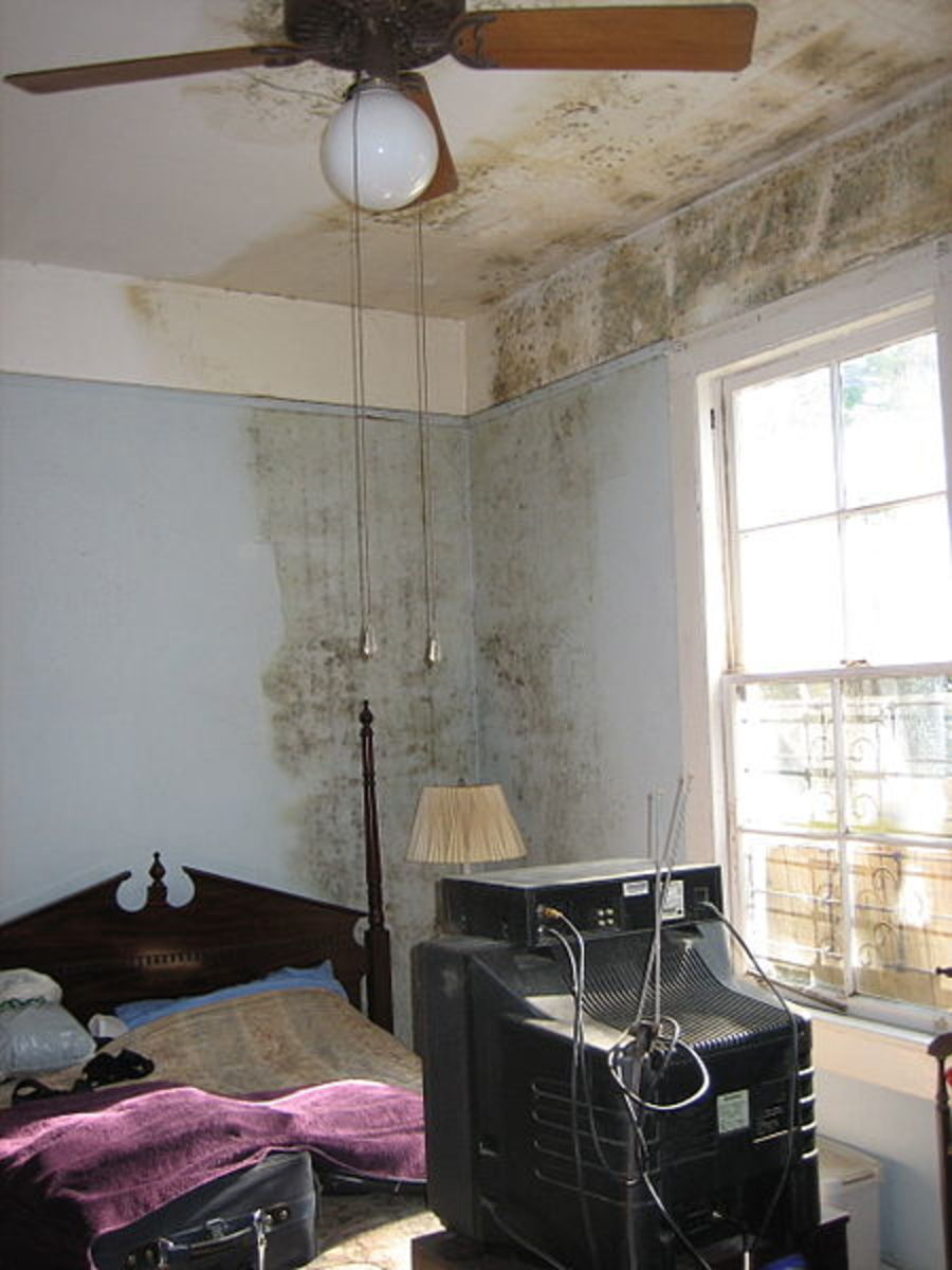 What Causes Damp (Mold) in Houses?