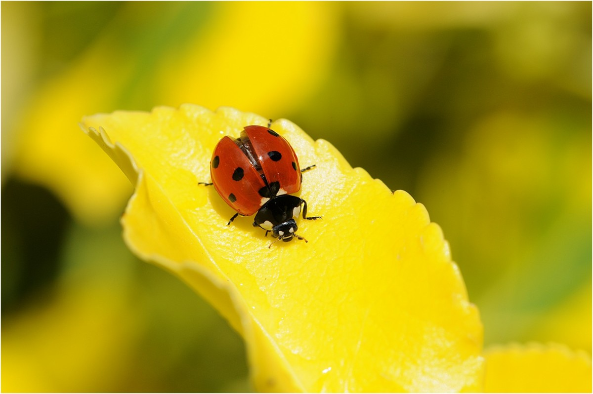 Macro Photography:  Study the Field Before You Shoot!