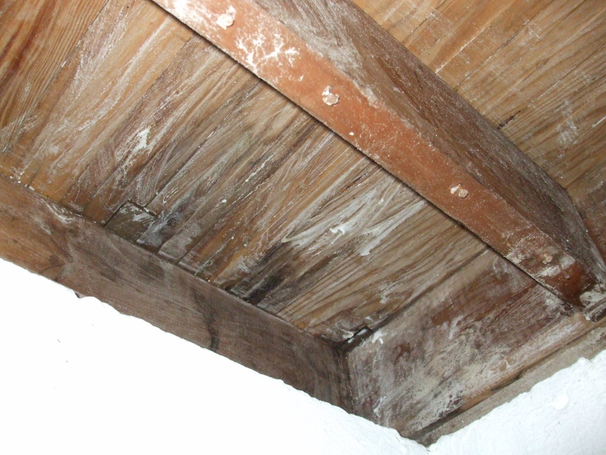 "The underside of flooring coated with Borax ""paint."""